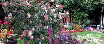 wyjatkowy dom i ogród