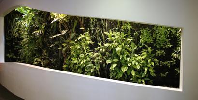 Ogród wertykalny we wnętrzu. Jak go założyć i pielęgnować?