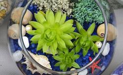 Kreatywna (bez-donicowa) uprawa roślin pokojowych