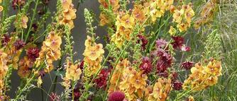 Łąka kwietna czy wiejski ogródek? Łąka kwiatowa zamiast trawnika