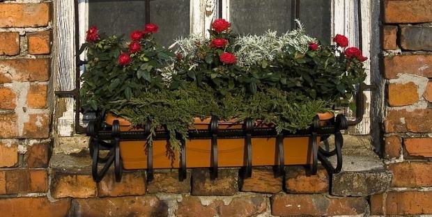 Kwiaty w skrzynkach - róże