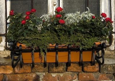 Kompozycje kwiatowe z róż, ziół i jałowca. Rośliny na balkon i taras